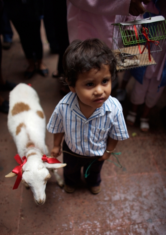 A boy holds his sheep by a leash as he attends the Blessing of the Animals celebration in Oaxaca, Mexico / © Chico Sanchez @ Alamy (BKKH87)