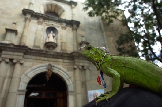 An iguana stands on her owners hat outside La Merced Catholic church during the Blessing of the Animals in Oaxaca, Mexico / © Chico Sanchez @ Alamy (ID BM07JJ)